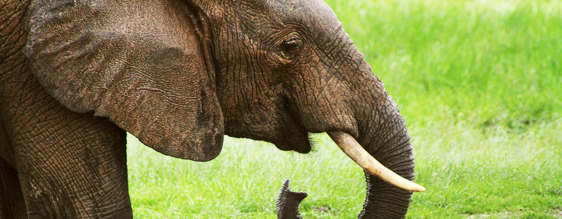 Experience the Elephants of Hwange